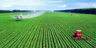 农业农村发展新业态 如何发展好花海经济?