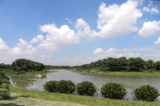 大圳埔排渠两岸绿化工程