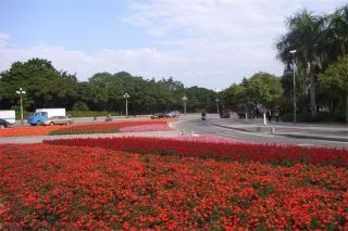 东莞市市区道路渠化岛时花种植及绿化养护